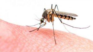 denggi dan malaria